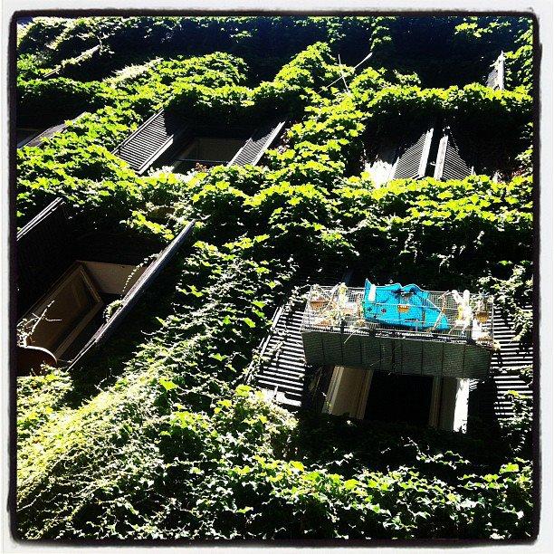 Roma è verde